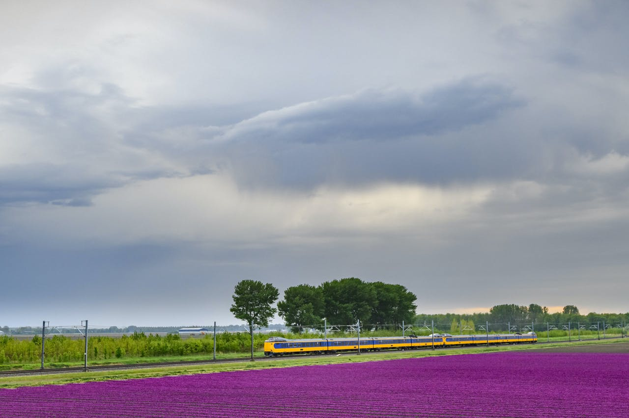 Train passing blossoming purple tulips in a field during a stormy spring afternoon with incoming thunderstrom clouds over the horizon
